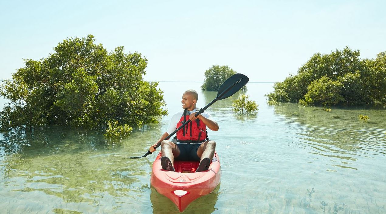 Kayaking through the mangrove forest